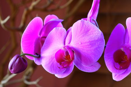 pink orchid Stock Photo - 2145796