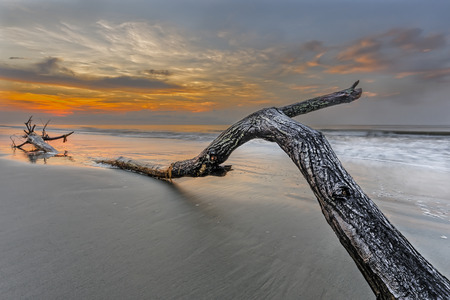 Bough on the beach in Hilton head Island Stock Photo