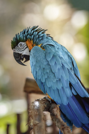 bird feathers: Colorful Parrot Ara in naples, Florida Zoo Stock Photo
