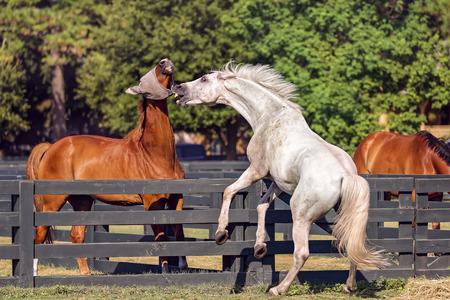 Horse riding on Hilton Head Island, South Carolina