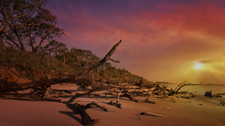 Black Rock Beach with its fallen trees on Big Talbot State Park