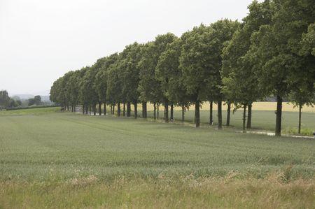 tree-lined walk in germany photo