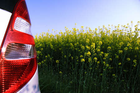 rape area under cultivation - rear lights of a car in front Stock Photo - 792795