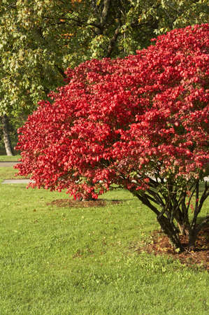 indian summer the usa photo