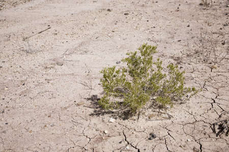 hassock: Mud cracked Earth in western Utah, USA