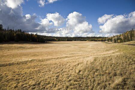 boles: Grassland and Forest at Kaibab National Forest Arizona USA Stock Photo
