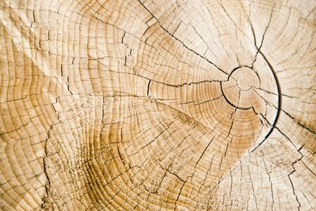 lumbering: Annual rings - Cutted tree, Kaibab National Forest in Arizona, USA Stock Photo