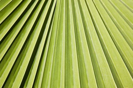 Green leaf of a palm tree photo