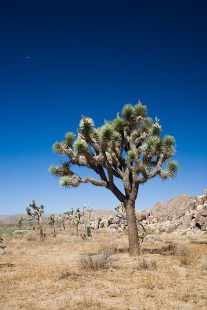 Joshua Tree National Park is located in south-eastern California. photo
