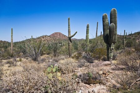 Saguaro National Park Arizona USA photo