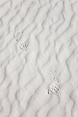 Footprint - White Sands National Monument in New Mexico, USA Stock Photo - 3832580