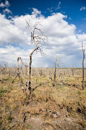spunk: Forest fire, Mesa Verde National Park in Colorado, USA