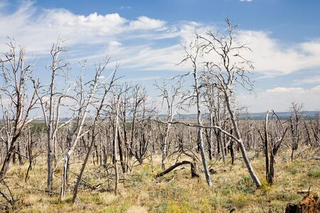 Forest fire, Mesa Verde National Park in Colorado, USA photo