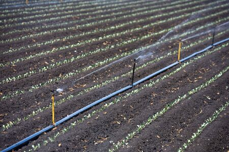 aquifer: Irrigation plant in action, Lompoc in California, USA Stock Photo