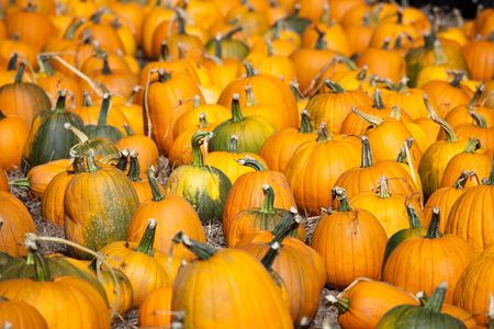 Pumpkins, Santa Cruz in California, USA photo