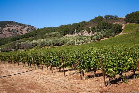 nappa: Wine Country, Nappa Valley in California, USA Stock Photo