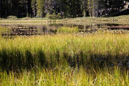 meadowland: Siesta Lake, Yosemite National Park in California, USA