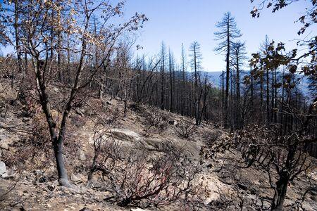 spunk: Forestfire, Yosemite National Park in California, USA