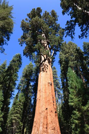 general: General Sherman (tree), Sequoia National Park in California, USA Stock Photo