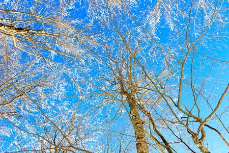 winter landscapewith snow covered trees against blue sky Stock Photo - 12730922