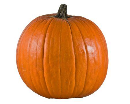 Big pumpkin alpha photo