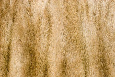 Mink fur alpha