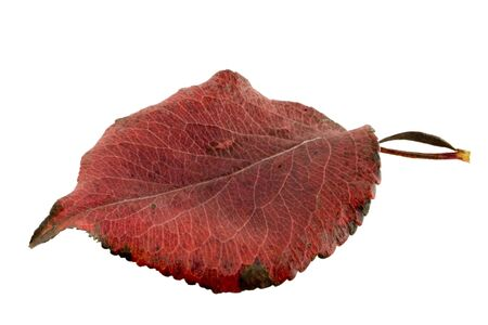 Leaf alpha