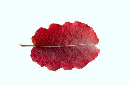Leaf beta Stok Fotoğraf