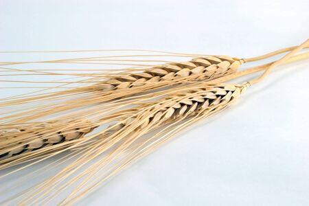Wheat heads Stok Fotoğraf