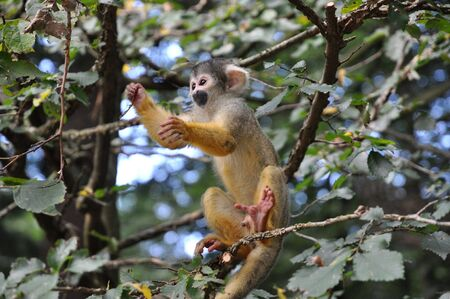 young monkey playing around in a tree