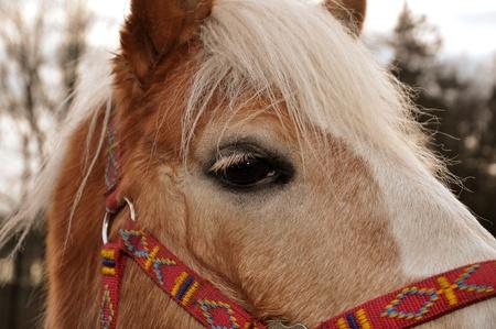 Brown horse with beautiful white mane and eyelashes Stock Photo - 8427843