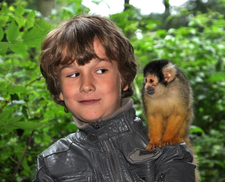 Close encounter with a Saimiri Monkey  Stock Photo