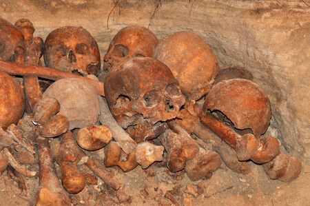 Group of skulls and bones from an unknown skeleton Stock Photo