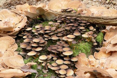 Circle of bracket fungus