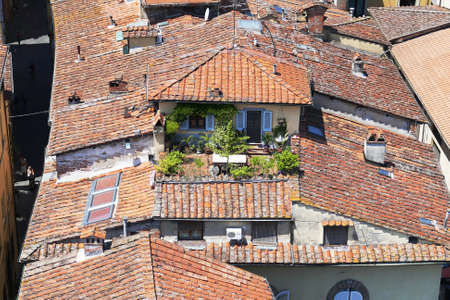 Roofgarden in the city of Lucca, Italy