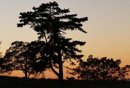Sunset in Shenandoah with backlighted deer Stock Photo