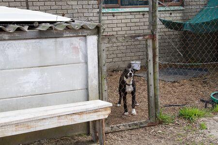 Old watch dog at scrapyard