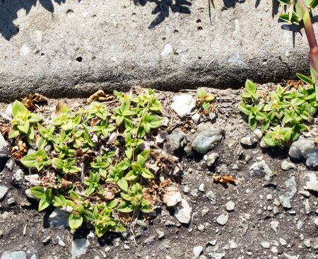 Weeds growing in and damaging tarred road surface South Africa Foto de archivo - 150125638