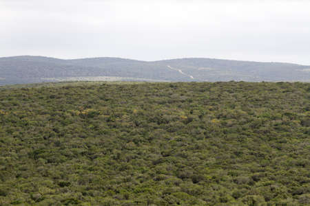 Addo Elephant National Park, South Africa: vista of the thick and impenetrable valley bushveld characteristic of the region