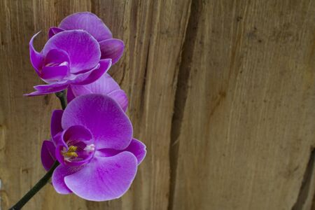 purple orchid close up photo