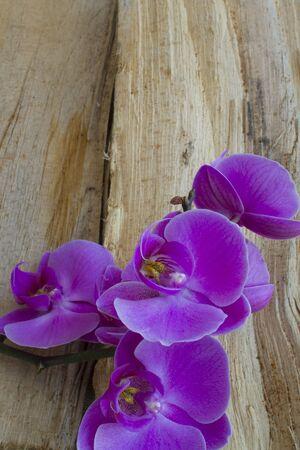 Purple Orchid on wood