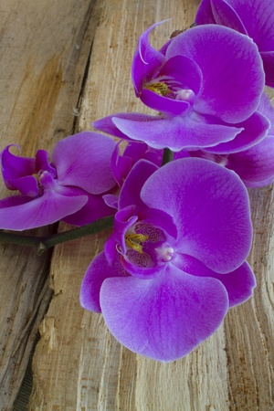 Purple Orchid on Wood photo