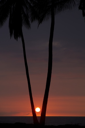 Sunset between the Palmtrees
