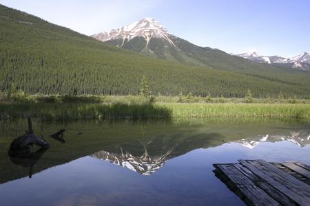 backwoods: Reflections