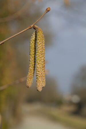 announcing spring photo