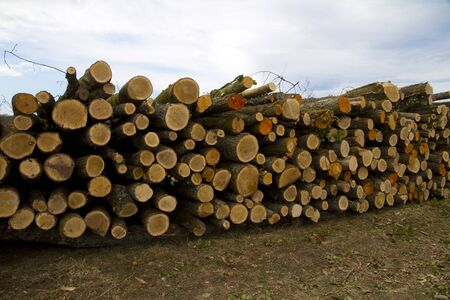 ecological forestry Stock Photo