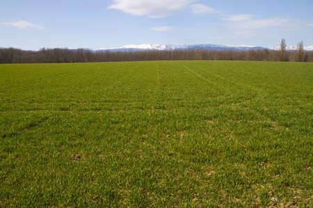 grass in the sun Stock Photo