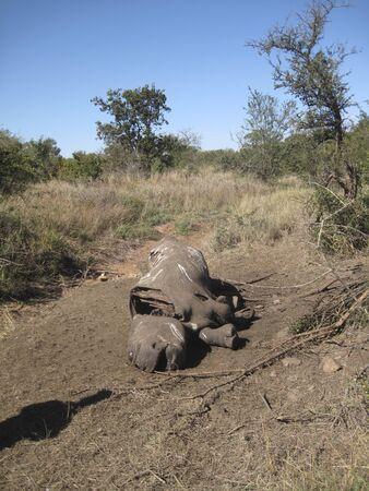 Dead Rhino Editorial