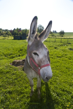 burro mirando a la c�mara photo