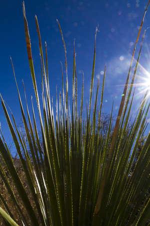 Palm leaf against sun